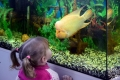 """занятие """"Волшебный мир аквариума"""""""