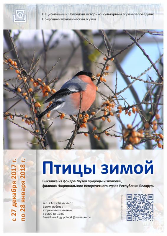 Выставка «Птицы зимой». Природно-экологический музей. г. Полоцк, 2017 г.